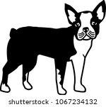 boston terrier silhouette real... | Shutterstock .eps vector #1067234132