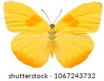 Stock photo yellow butterfly isolated on white background 1067243732