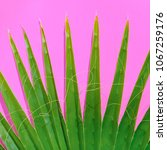 plant on pink. palm leaf.  | Shutterstock . vector #1067259176