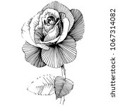 wildflower rose  flower in a... | Shutterstock .eps vector #1067314082