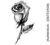 wildflower rose  flower in a... | Shutterstock .eps vector #1067314106