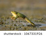 Green Frog Jump On A Beautiful...