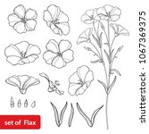 vector set with outline flax or ... | Shutterstock .eps vector #1067369375