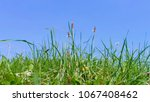green grasses and blue sky in... | Shutterstock . vector #1067408462