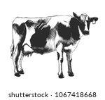 vector engraved style... | Shutterstock .eps vector #1067418668