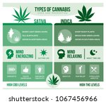 cannabis sativa and cannabis... | Shutterstock .eps vector #1067456966