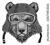brown bear russian bear animal...   Shutterstock .eps vector #1067481836