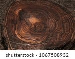 Tree Cut. Wooden Texture Of Th...