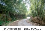 Small photo of Tortuos road going through bamboo forest in Lung Pan, Cao Bang province, Viet Nam