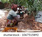 women from ivory coast working... | Shutterstock . vector #1067515892