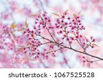 pink flowers in there forest... | Shutterstock . vector #1067525528