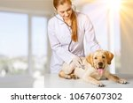 young female veterinarian doctor | Shutterstock . vector #1067607302