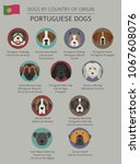 dogs by country of origin.... | Shutterstock .eps vector #1067608076