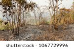 fire forest in summer  natural... | Shutterstock . vector #1067729996