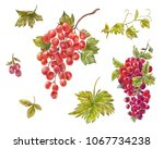 watercolor set of grapes. hand... | Shutterstock . vector #1067734238