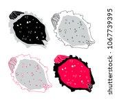 vector illustration of pitaya... | Shutterstock .eps vector #1067739395