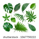 collage of exotic plant green... | Shutterstock . vector #1067750222