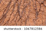 dry tree roots on orange clay... | Shutterstock . vector #1067812586