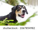 the portrait of a happy... | Shutterstock . vector #1067854982
