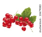 red currant | Shutterstock .eps vector #10679083