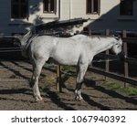horse  equus ferus caballus ... | Shutterstock . vector #1067940392