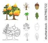 burning tree  palm  acorn  dry... | Shutterstock .eps vector #1067982722