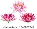 set pink lotus flower ... | Shutterstock . vector #1068057266