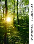 Stock photo forest in spring at sunrise 1068066155