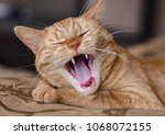 cat with open mouth | Shutterstock . vector #1068072155