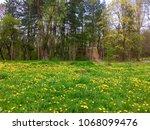 field of wild flowers in spring | Shutterstock . vector #1068099476