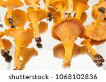 a collection of freshly...   Shutterstock . vector #1068102836