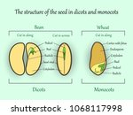 vector education botany banner  ... | Shutterstock .eps vector #1068117998