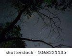 Under The Tree Night Time Sky...