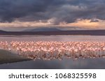 flamingos on the colorado... | Shutterstock . vector #1068325598