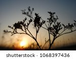grass and sun  evening sky. | Shutterstock . vector #1068397436