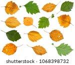 Set Of Various Leaves Of...
