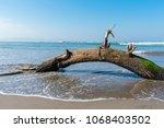 fallen tree limb with green... | Shutterstock . vector #1068403502