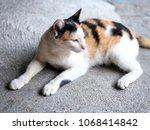 close up cat  purebred kitten... | Shutterstock . vector #1068414842