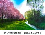 wild cherry flowers in the... | Shutterstock . vector #1068561956