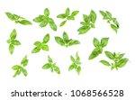 sweet genovese basil leaves...   Shutterstock . vector #1068566528