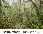 interior of mossy montane...   Shutterstock . vector #1068595712