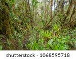 interior of mossy montane...   Shutterstock . vector #1068595718