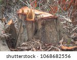 Tree Stump In The Forest...