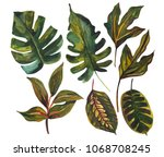 Stock photo watercolor tropical leaf set drawing of unusual leaves isolated on white background hand painted 1068708245