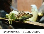st. petersburg  russia   may 01 ... | Shutterstock . vector #1068729392