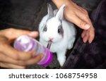 A Lovely Little Rabbit Is...
