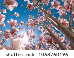 perfect nature background for... | Shutterstock . vector #1068760196