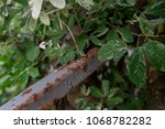 rust and tree durability | Shutterstock . vector #1068782282