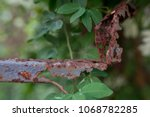 rust and tree durability | Shutterstock . vector #1068782285