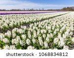 landscape with flowering...   Shutterstock . vector #1068834812